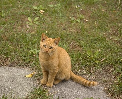 cat07