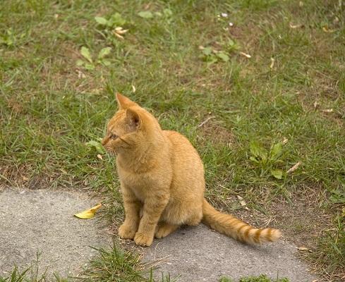 cat08
